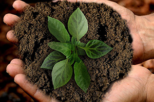 La sostenibilidad como un pilar de posicionamiento corporativo