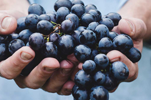 Wine Marketing, nuestro nuevo proyecto de marketing sectorial